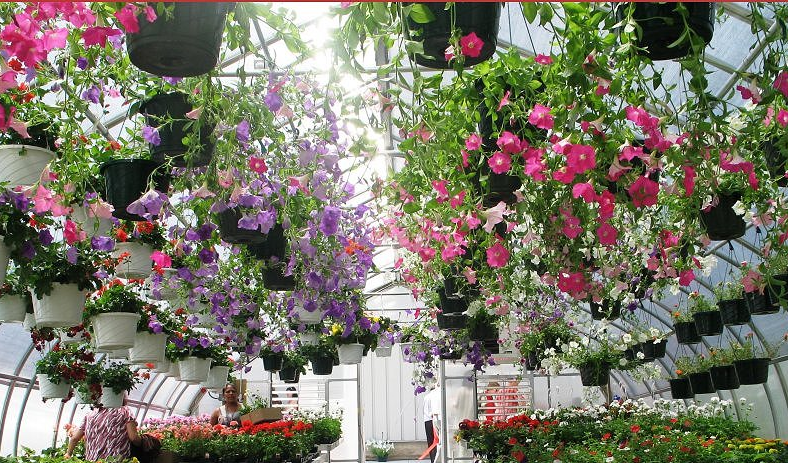 aluminum polycarbonate flower greenhouse 2.png